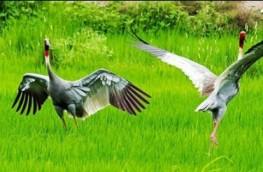 Wildlife of Nepal